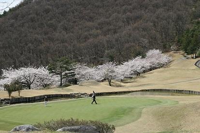 18H桜.jpg