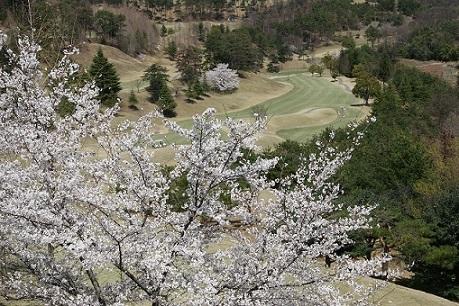 1H桜.JPG